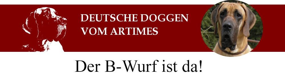 Deutsche Doggen vom Artimes